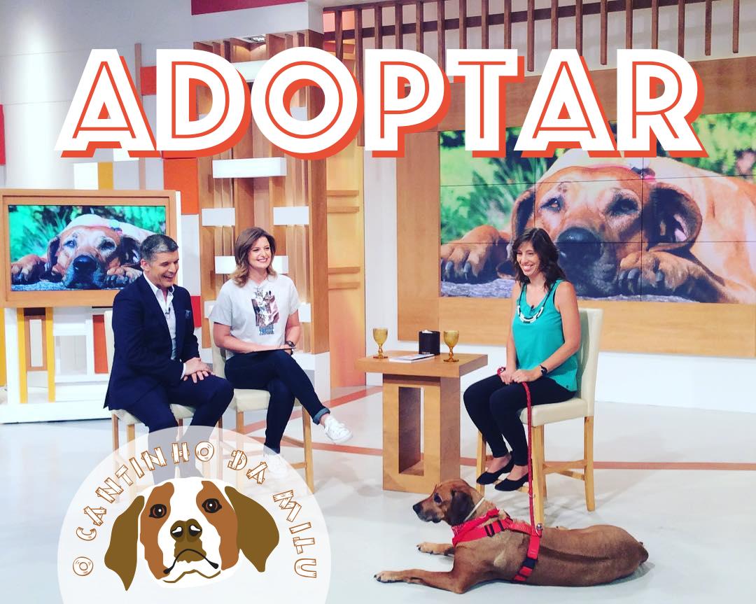 À conversa sobre adoptar um cão especial