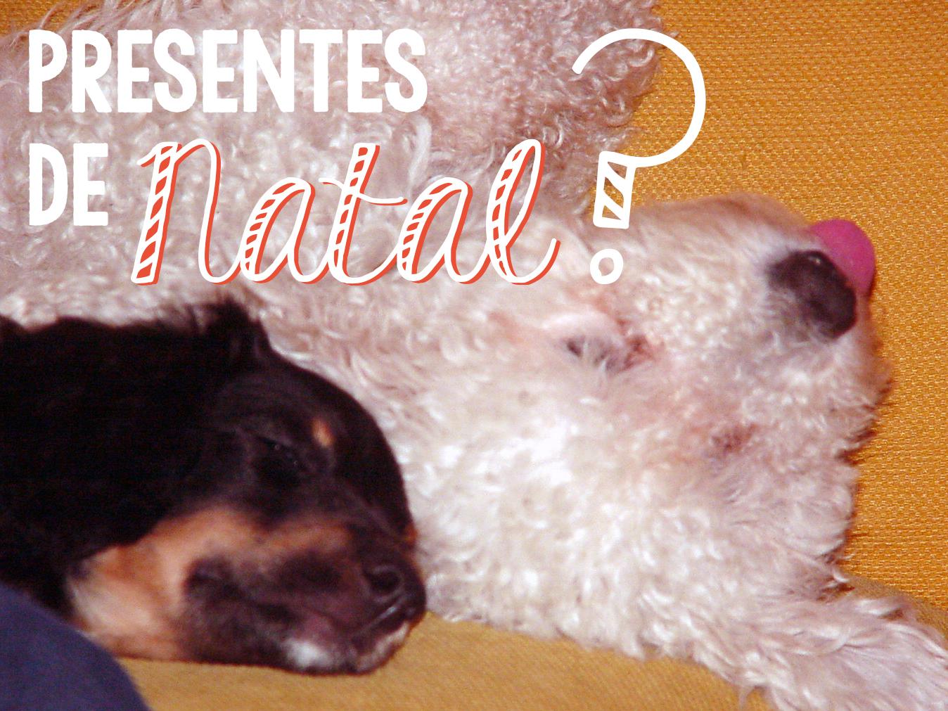 Animais como presentes de Natal: 6 contras e 2 soluções