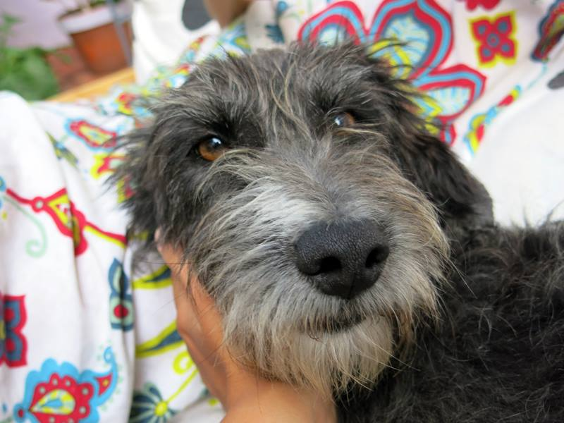 fotografia de cão para adopção