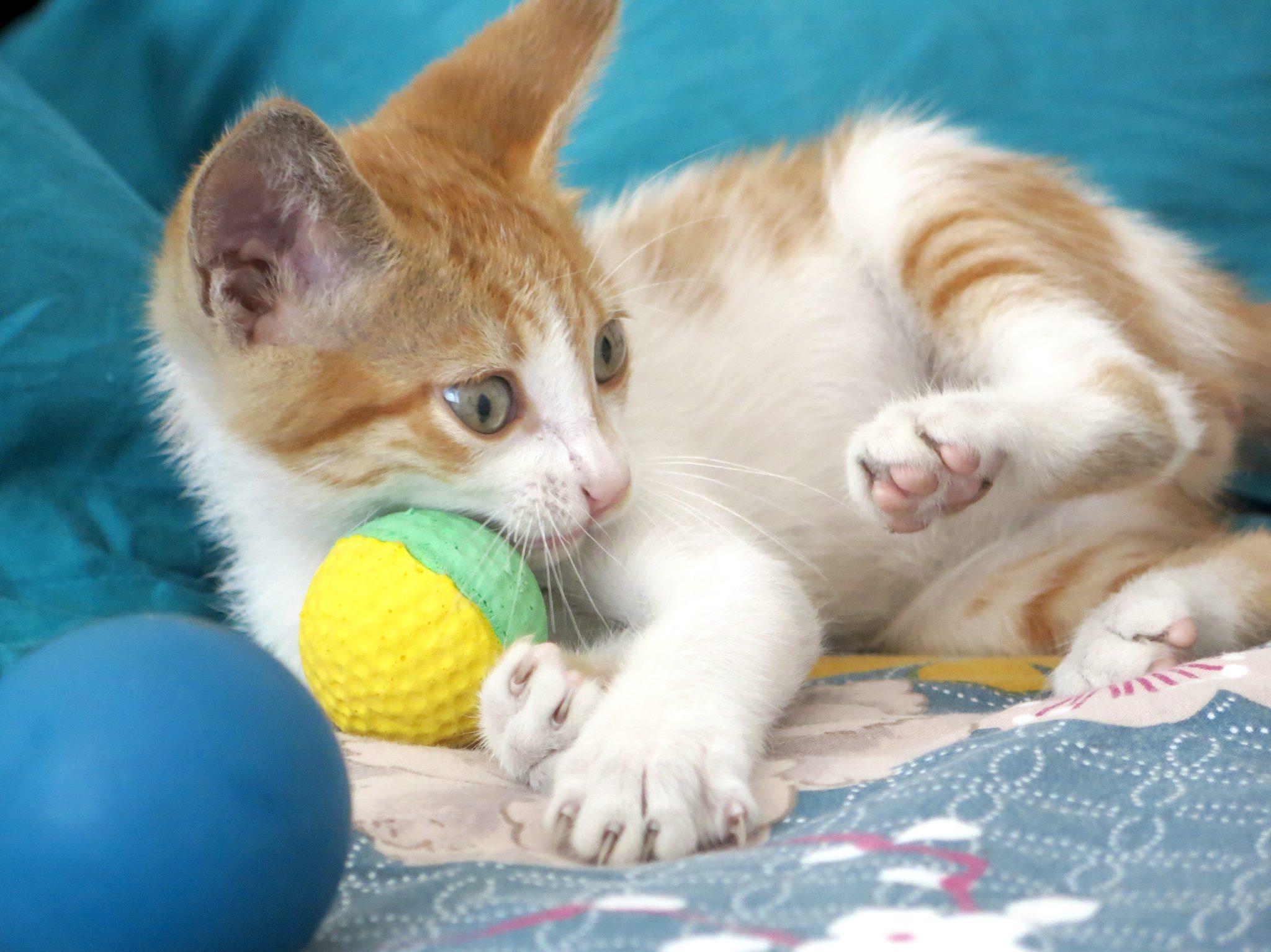 fotografia de gato para adopção