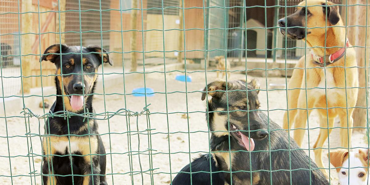 abrigo de cães