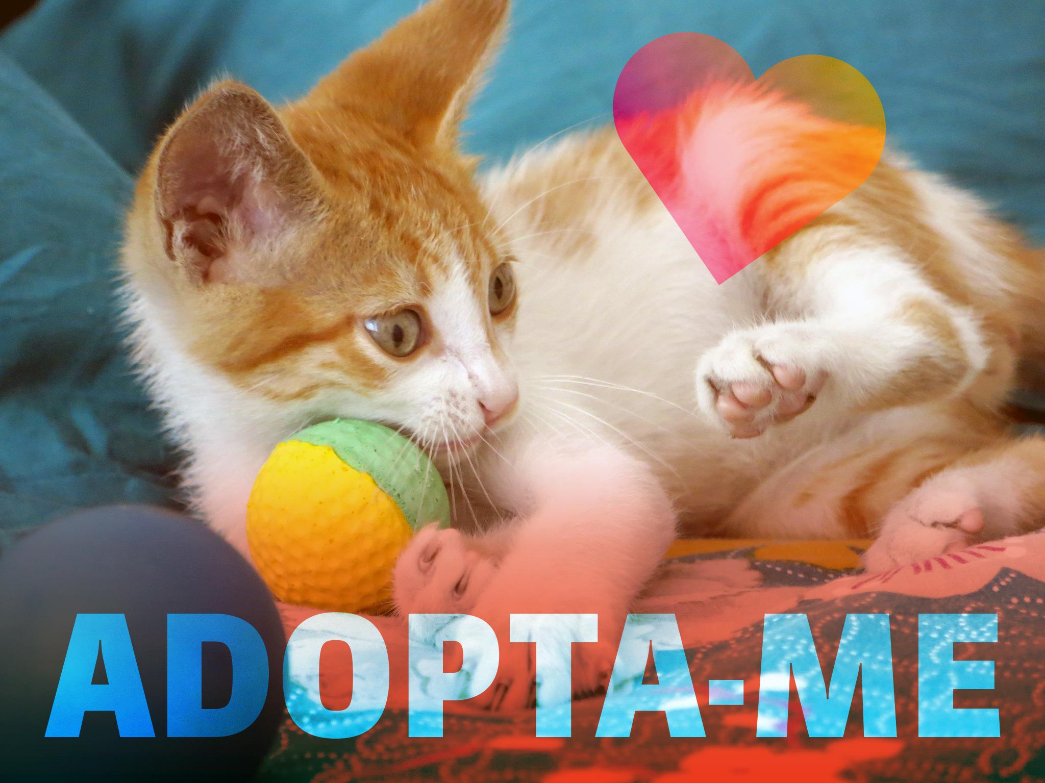Mini guia: como dar animais para adopção